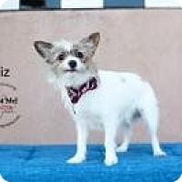 Adopt A Pet :: Giz - Shawnee Mission, KS
