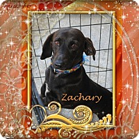Adopt A Pet :: Zachary - Crowley, LA