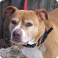 Adopt A Pet :: Sheila - Evans, CO