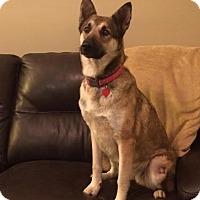 Adopt A Pet :: Valory - Nashua, NH