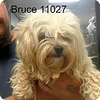Adopt A Pet :: Bruce - baltimore, MD