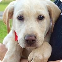 Adopt A Pet :: Emmett - Jasper, TN