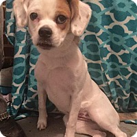 Adopt A Pet :: Hannah - Columbia, MD