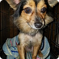 Adopt A Pet :: Rebel - (RC) - Santa Ana, CA