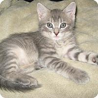 Adopt A Pet :: Brando - Kansas City, MO