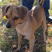 Adopt A Pet :: Tucker - Port Jervis, NY