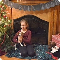 Adopt A Pet :: Maria - Huntington, IN