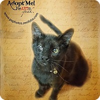 Adopt A Pet :: Louie - Belton, MO