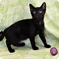 Adopt A Pet :: Minka - Greensboro, NC