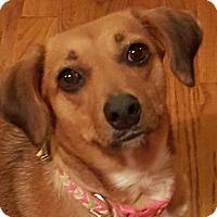 Adopt A Pet :: Fairley - Duluth, GA