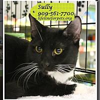 Adopt A Pet :: Sully - Monrovia, CA