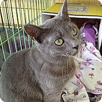 Adopt A Pet :: Abigail - Island Park, NY