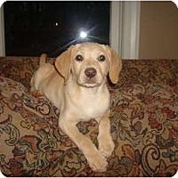 Adopt A Pet :: Special K - Cumming, GA