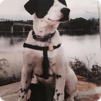Adopt A Pet :: CHLOE - Paron, AR