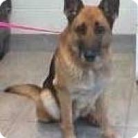 Adopt A Pet :: Lyric - Bowie, TX