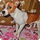 Adopt A Pet :: Spanky