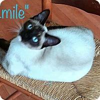 Adopt A Pet :: Emile - Kelso/Longview, WA