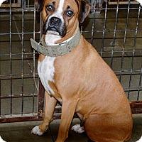 Adopt A Pet :: Ginger - San Jacinto, CA