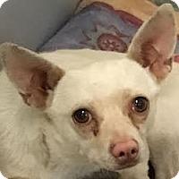 Adopt A Pet :: Walt - MINNEAPOLIS, KS