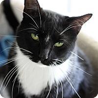 Adopt A Pet :: Aries - Carencro, LA