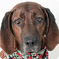 Adopt A Pet :: Imagine Emma - Sacramento area, CA