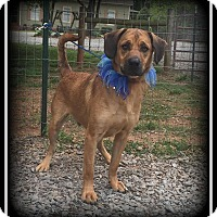 Adopt A Pet :: Harley - Indian Trail, NC