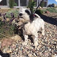Adopt A Pet :: Trouper - Estherville, IA