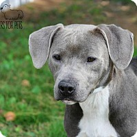Adopt A Pet :: Kinick - Troy, IL