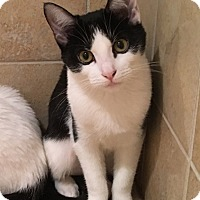 Adopt A Pet :: Checkers - Elmwood Park, NJ