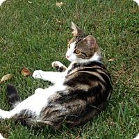 Adopt A Pet :: Herschel - Wilmore, KY