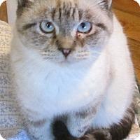 Adopt A Pet :: Nathan - Buhl, ID