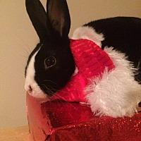 Adopt A Pet :: Scarlet - Conshohocken, PA