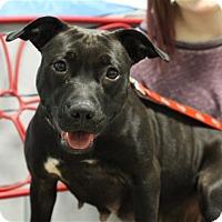 Adopt A Pet :: Vita - Elyria, OH