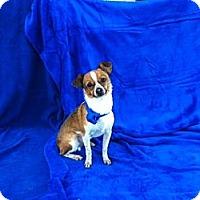 Adopt A Pet :: Keno - Baton Rouge, LA