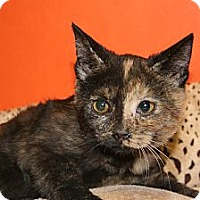 Adopt A Pet :: CARINA - SILVER SPRING, MD
