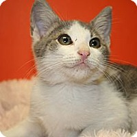 Adopt A Pet :: ETHAN - SILVER SPRING, MD