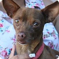 Adopt A Pet :: Lipton - Canoga Park, CA