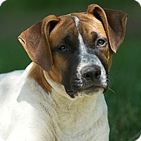 Adopt A Pet :: Pima - Providence, RI
