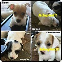 Adopt A Pet :: Birdy & Puppies in Dallas - Dallas/Ft. Worth, TX