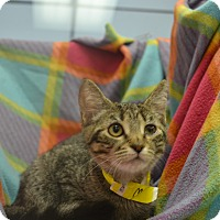 Adopt A Pet :: Morgana - East Smithfield, PA