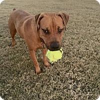 Adopt A Pet :: JR - Phoenxville, PA