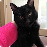 Adopt A Pet :: Delilah - North Ogden, UT