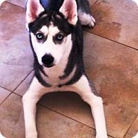 Adopt A Pet :: LUNA - DeLand, FL