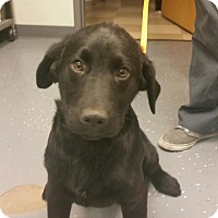 Adopt A Pet :: Jack - available 2/20 - Sparta, NJ