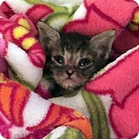 Adopt A Pet :: Envy - Austin, TX