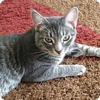 Adopt A Pet :: Jonah - Harrison, NY