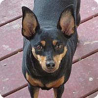 Adopt A Pet :: Lady in Michigan - Lansing, MI