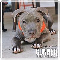 Adopt A Pet :: Gunner - Rancho Cucamonga, CA