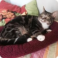 Adopt A Pet :: Felix - Harrisburg, NC