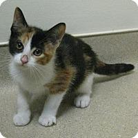 Adopt A Pet :: Tawny - Gary, IN